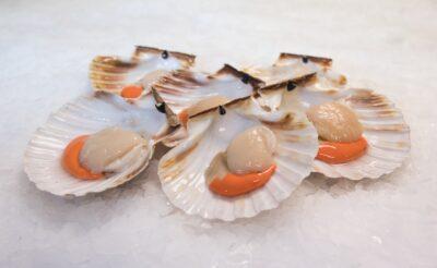 half shell kings
