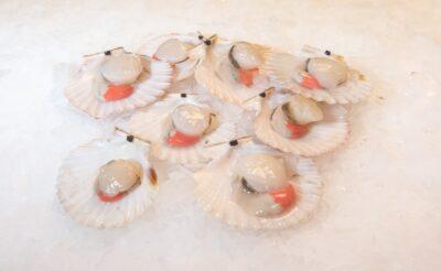 half shell queens